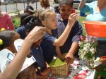 Edible Schoolyard Project - New Orleans